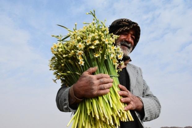 خروج پیاز گل نرگس و بذر پنبه از خراسان جنوبی ممنوع شد