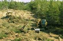 400 درخت مثمر در گچساران قلع و قمع شد