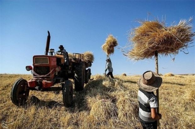56 طرح کشاورزی شهرضا در سامانه بهین یاب ثبت شد