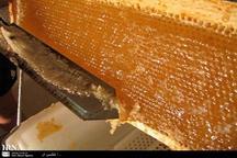 تولید محصولات جانبی عسل در گیلان افزایش یافت