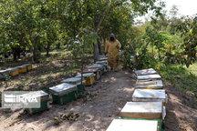 افزایش حدود ۳۰ درصدی محصولات جانبی زنبورستانهای البرز