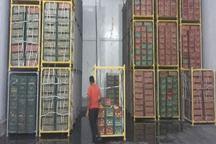 500 تن سیب درختی شب عید در هرمزگان ذخیره سازی شد