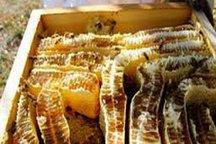 صنعت زنبورداری نیازمند حمایت بیشتر است