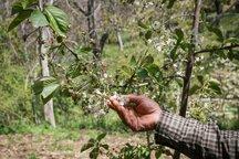 کشاورزی آذربایجان شرقی 1468 میلیارد تومان خسارت دید
