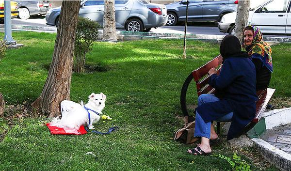 سگ گردانی در فردیس ممنوع شد  الزام در تحویل سگ و جلب متخلفین