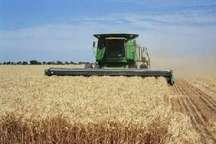 افرون بر چهار هزار تن گندم مازاد بر مصرف کشاورزان بخش مرکزی خاش خریداری شد