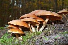 مصرف قارچ های فله ای خطرآفرین است