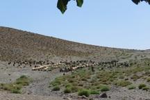 خشکسالی و گرانی علوفه دام در خراسان جنوبی