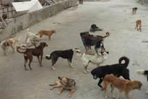 جمعیت رو به تزاید سگهای ولگرد و دردسرهای کنترل آنها