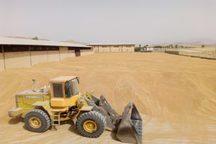 خرید تضمینی گندم در گچساران آغاز شد