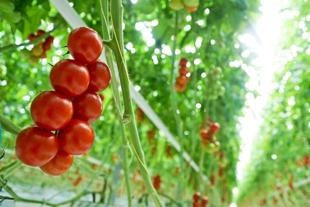91 طرح کشاورزی در دهه فجر آماده بهره برداری است