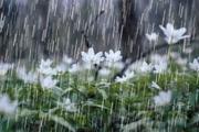 بارش باران بر طراوت بهاری ارومیه افزود