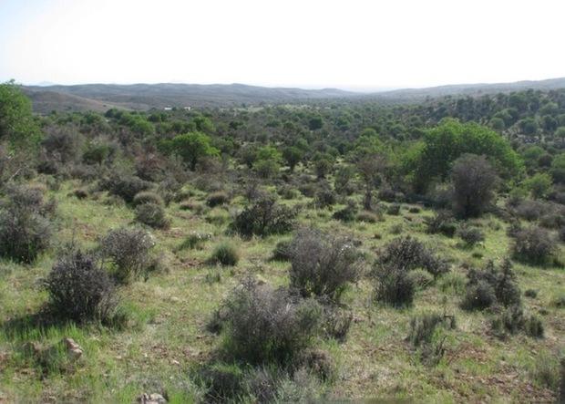 جنگل های خاتم، نگین سبز  کویر استان یزد