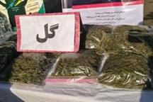 سه تن موادمخدر از نوع گل در قزوین کشف شد