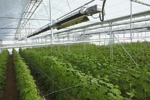 35 هکتار زمین کشاورزی در نقده به سرمایه گذاران واگذار شد
