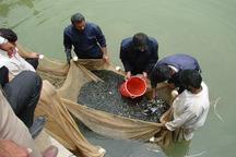 امسال 144 میلیون قطعه بچه ماهی استخوانی تولید می شود