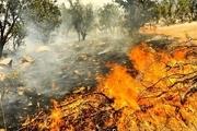 150 نقطه بحرانی حریق در جنگلهای لرستان شناسایی شد