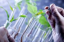 حوزه زیست فناوری در حل مسائل جاری کشور راهگشا است