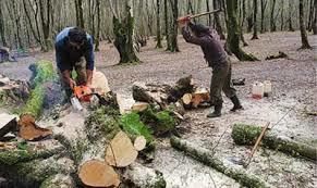تخریب منابع طبیعی هشترود توسط ایلات و عشایر وارداتی خطرناک است
