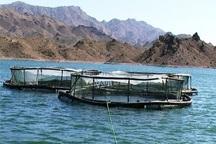 رهاسازی 800 هزار قطعه بچه ماهی پرورشی در دریاچه کارون 4