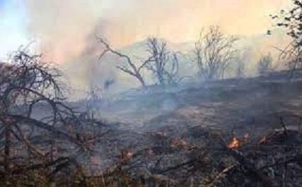 مهار آتش سوزی در باغات شهرستان کیار
