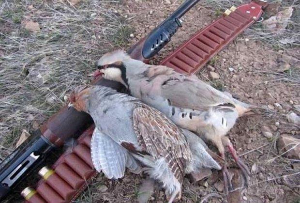 شکارچیان غیر مجاز در لامرد دستگیر شدند