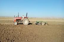 26 هزار هکتار از مزارع میاندوآب به کشت گندم اختصاص یافت
