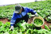 کشاورزی گیلانغرب بر مدار توسعه