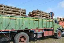کشف 835 اصله چوب قاچاق در آستانه اشرفیه