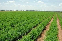 اجرای 608 طرح تحقیقاتی در بخش کشاورزی اردبیل