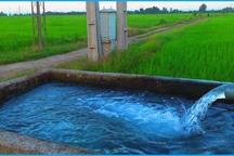کشت دوم برنج با آب چاه در بابل ممنوع شد