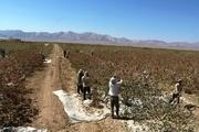 افزون بر ۱.۷ میلیون تن محصولات کشاورزی و دامی دراستان یزد تولید شد