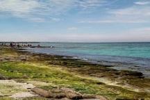 راهنمایان گردشگری درتور پرحاشیه جزیره شیدور حضور نداشته اند