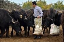 تغییر نگرش تولیدات دامی و کشاورزی نیازمند فرهنگ سازی