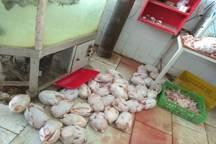 چهار تن گوشت مرغ فاسد در بروجرد کشف و ضبط شد